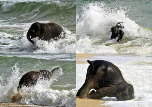 elephant in the waves