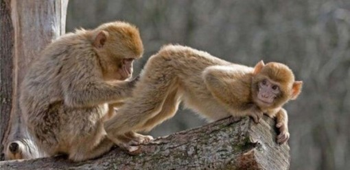 funny-pictures-of-monkeys